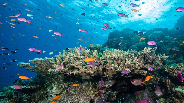 underwater, coral with fish, great barrier reef