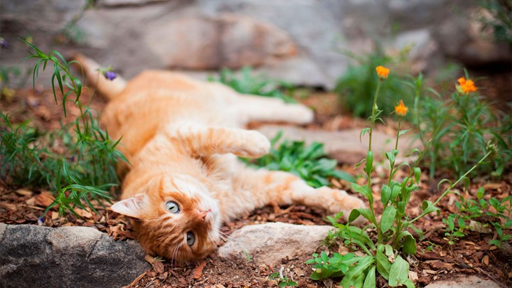 ginger cat lying down outside with flowers