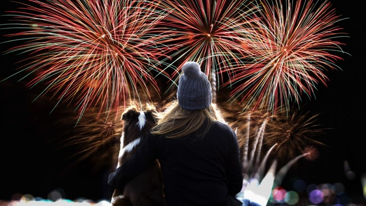 dog and woman watching fireworks