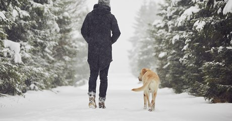 Male figure walking with dog in snow from behind